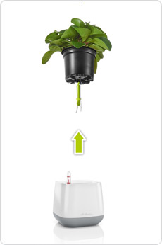 YULA planter - proven system