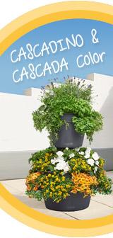 Go to CASCADINO & CASCADA Topic